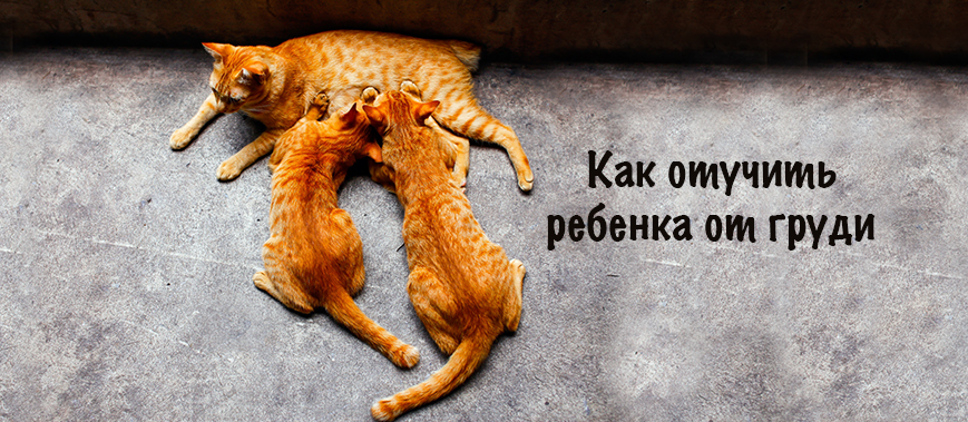 kak-otuchit-rebenka-ot-grudi
